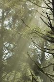 Forest Sunlight — Stock Photo