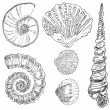 Royalty-Free Stock ベクターイメージ: Shells of marine fauna