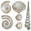 Stock Vector: Shells of marine fauna