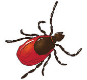 House dust mite — Stock Vector