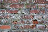 Grunge ladrillo wal — Foto de Stock
