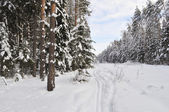 Ski track in winter forest — Stok fotoğraf