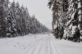 Trails in winter forest — Stockfoto