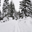 Trails in winter forest — Stock Photo #8326218