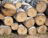 Pile of birch firewood — Stock Photo