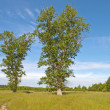 Country road in the meadow — Stock Photo #9889894