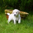 Stock Photo: Close Up playful puppy outdoors