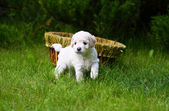 Close Up playful puppy outdoors — Stock Photo