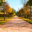 Autumn park — Stock Photo #10568739
