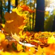 Autumn leaves — Stock Photo #10568771