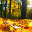 Autumn leaves — Stock Photo #10568778