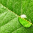 Water drop on leaf — Stock Photo #10569531