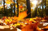 Nedfallna löv — Stockfoto