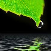 Goutte d'eau sur feuille verte isolée sur fond noir — Photo