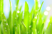 Fresh wet grass in sun rays, closeup — Stock Photo