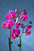 Beautiful Orchid — Foto Stock