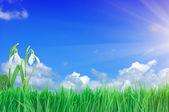Campanilla de invierno, verde césped y azul cielo — Foto de Stock