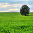 Tree on a green pasture — Stock Photo