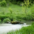 River with grass in forest — Stock Photo #8564590