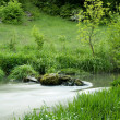 River with grass in forest — Stock Photo