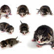 Blind kittens — Stock Photo