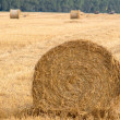 Field with rolls — Stock Photo