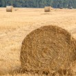 Royalty-Free Stock Photo: Field with rolls