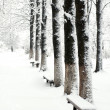 Path in snow-park — Stock Photo