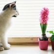 Cat on the window — Stock Photo #8566047