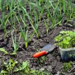 Gardening — Stock Photo #8566148