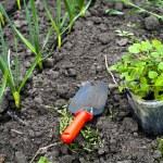 Gardening — Stock Photo #8566152