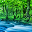 River in wood — Stock Photo