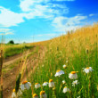 Field with flowers -  