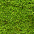 Green moss — Stock Photo #8568069