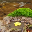 Leaf in river — Stock Photo