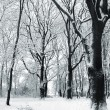 Cover of snow in a park — Stock Photo
