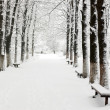 Lane in winter park — Stock Photo