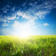 Bright sunset over green crops — Stock Photo