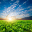 Stock Photo: Sunset over green crops
