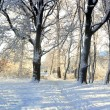 Snow in a park — Stock Photo