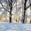 Stock Photo: Snow in a park