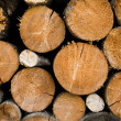 Logs — Stock Photo #8568622