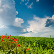 Green field with  poppies — Stock Photo