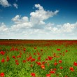 Green field with red poppies — Stock Photo
