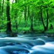 River in forest — Stock Photo #8569616