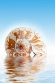 Seashell — Stockfoto