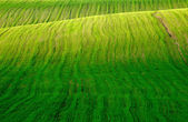 Field with green grass — Stock Photo