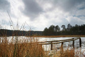 Lake in forest — Photo
