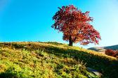 Autumn tree — ストック写真