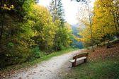 古いベンチ — ストック写真